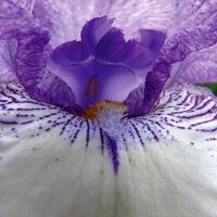 Flower Enhancers